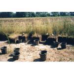 1998-07-22-Weitsche20A.jpg
